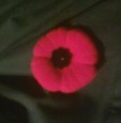 Poppy past
