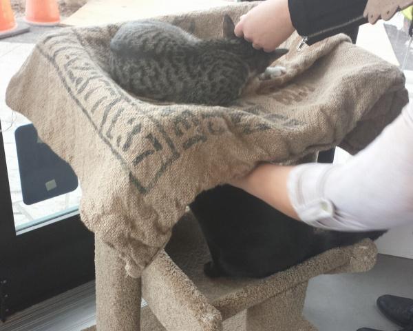 Dual cats