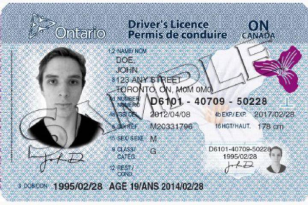 States Are Canadian Valid Drivers United Crossing Yes Georgia The Licenses In