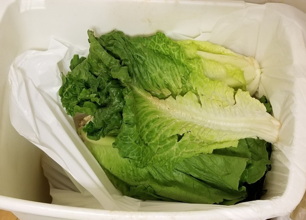 Romaine-lettuce-waste