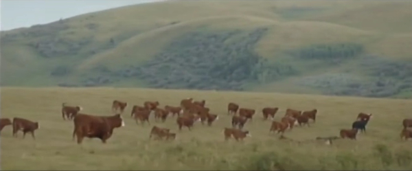 Mcdonalds-canada-sustainable-beef