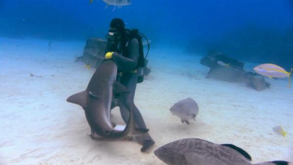Sharkwater-film