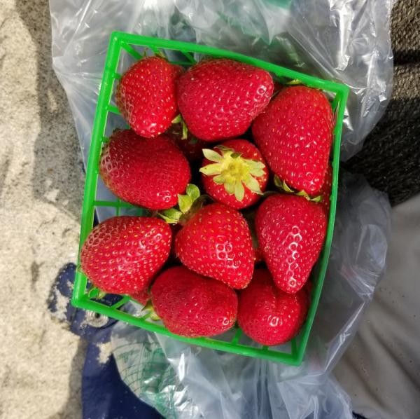Strawberries-winter-2019