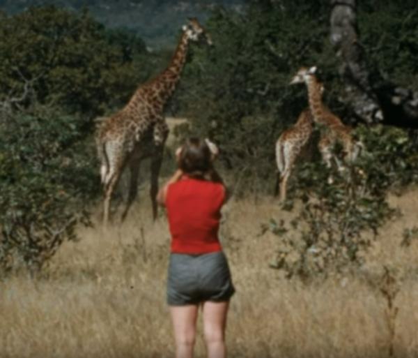 Woman-giraffes